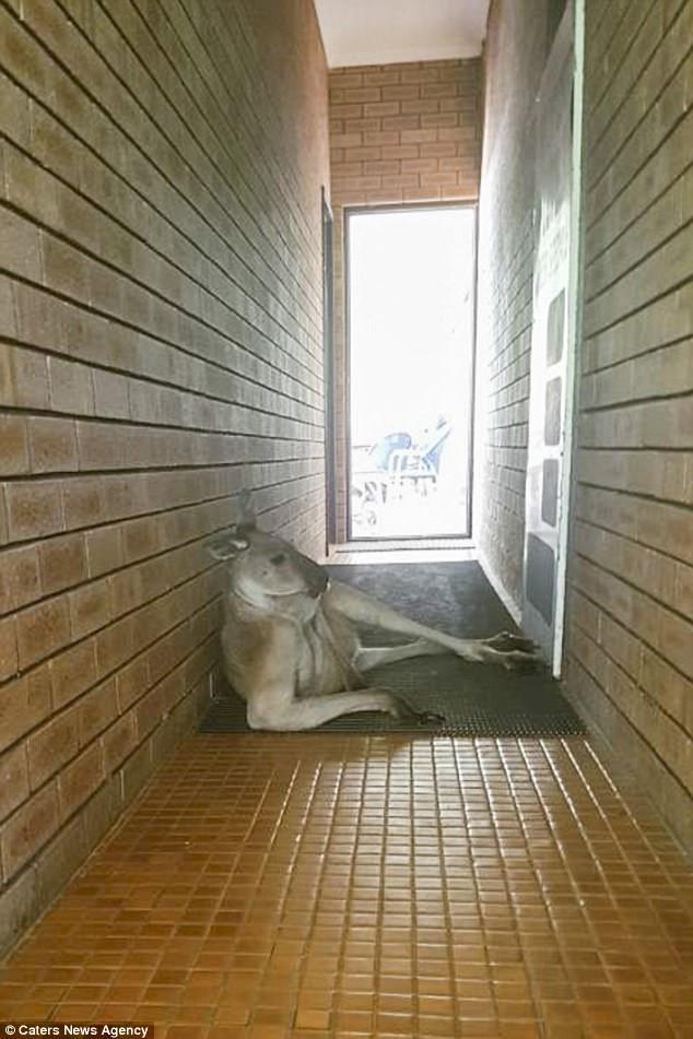 Dù có nỗi buồn phải giải tỏa nhưng nữ du khách đành nhịn khi thấy con chuột túi nằm lừa tình giữa lối đi toilet - Ảnh 1.