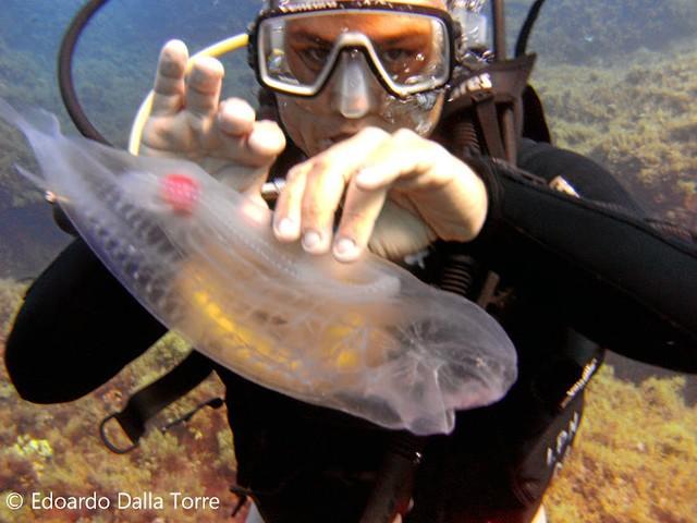 Đầu cá đuôi tôm thân trong suốt như sứa - sinh vật này có phải là sản phẩm của Photoshop? - Ảnh 3.