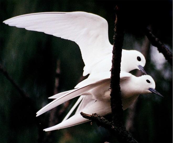 Loài chim lười nhất thế giới: Đẻ trứng trên cành cây, rơi vỡ đẻ quả khác - Ảnh 1.