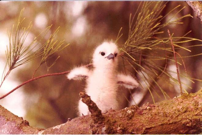 Loài chim lười nhất thế giới: Đẻ trứng trên cành cây, rơi vỡ đẻ quả khác - Ảnh 3.