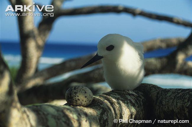 Loài chim lười nhất thế giới: Đẻ trứng trên cành cây, rơi vỡ đẻ quả khác - Ảnh 5.