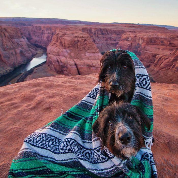 Cứu sống hai chú chó nhỏ, anh chủ tốt bụng còn đưa chúng đi du ngoạn khắp thế gian - Ảnh 5.