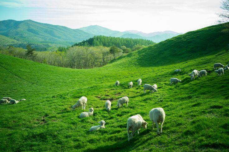 Đến Hàn Quốc, nhớ ghé trại cừu đẹp như phim mà Xuân Trường đã hẹn hò cùng bạn gái tin đồn - Ảnh 3.