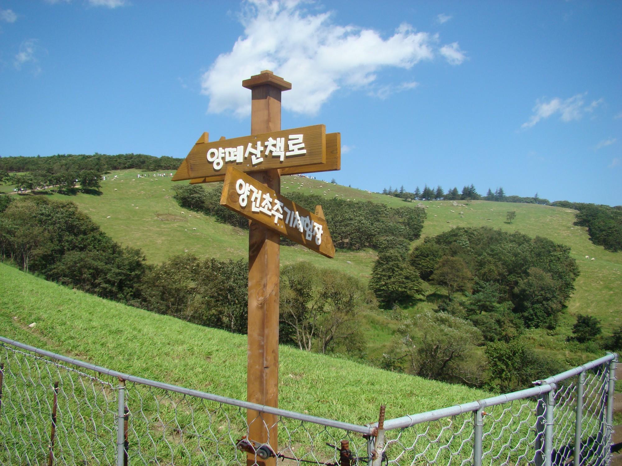 Đến Hàn Quốc, nhớ ghé trại cừu đẹp như phim mà Xuân Trường đã hẹn hò cùng bạn gái tin đồn - Ảnh 8.