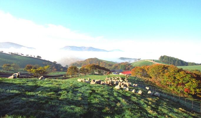 Đến Hàn Quốc, nhớ ghé trại cừu đẹp như phim mà Xuân Trường đã hẹn hò cùng bạn gái tin đồn - Ảnh 5.