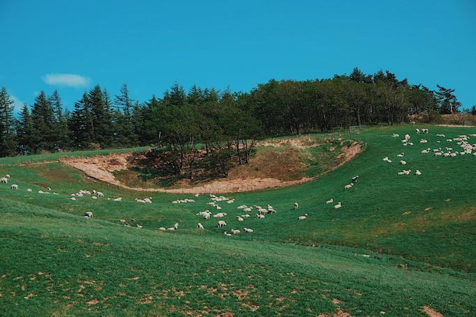 Đến Hàn Quốc, nhớ ghé trại cừu đẹp như phim mà Xuân Trường đã hẹn hò cùng bạn gái tin đồn - Ảnh 4.
