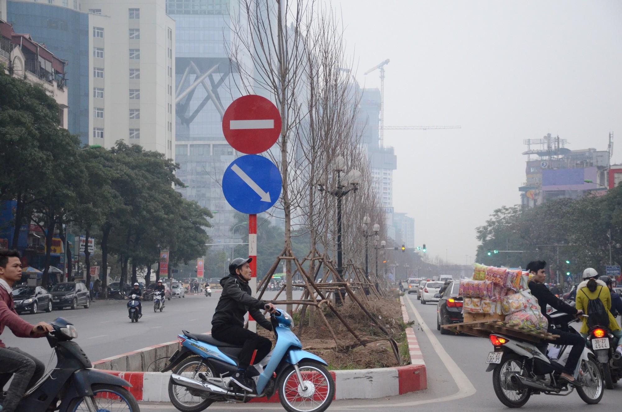 Chùm ảnh: Tận thấy hàng trăm cây phong lá đỏ mới được trồng trên phố Trần Duy Hưng ở Hà Nội - Ảnh 3.