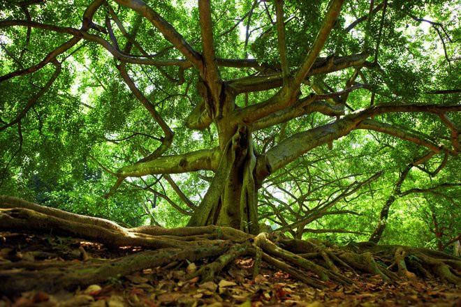 Câu chuyện xác người mất tích được tìm thấy nhờ... cái cây mọc ra từ dạ dày và sự thật đằng sau là gì? - Ảnh 2.