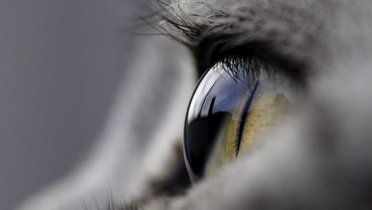 Chớp mắt liên tục nhưng tại sao chúng ta không thấy tối? Đừng tưởng đây là câu hỏi đơn giản, nó không dễ trả lời đâu - Ảnh 3.