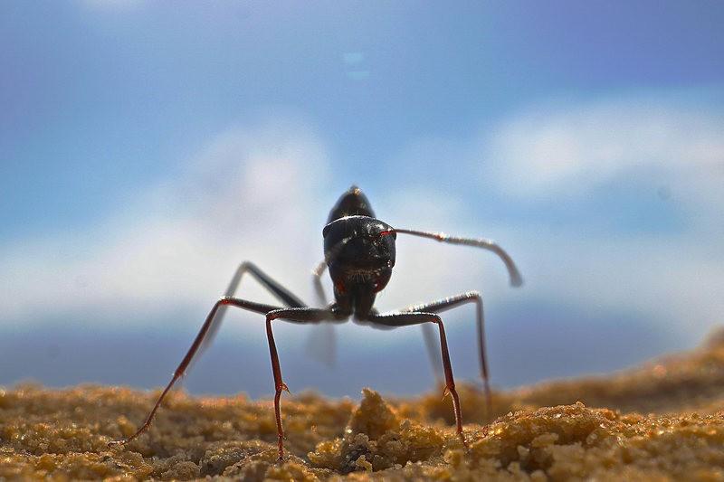 Đây là loài kiến kỳ lạ nhất sa mạc: Giải được cả toán lượng giác nhưng... quên luôn quê hương nếu thấy đồ ngon - Ảnh 1.