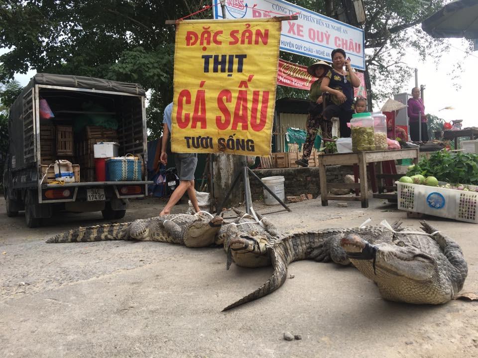 Rùng rợn cảnh xẻ thịt cá sấu bán ngay giữa đường - Ảnh 2.
