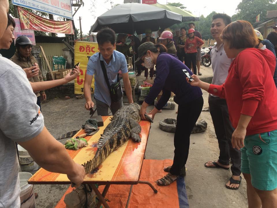 Rùng rợn cảnh xẻ thịt cá sấu bán ngay giữa đường - Ảnh 4.