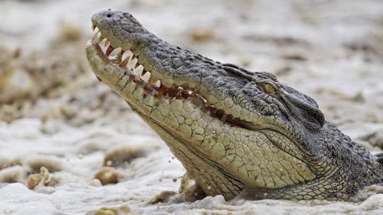 Úc: Đang đi câu cá, người phụ nữ bị cá sấu tha đi - Ảnh 1.