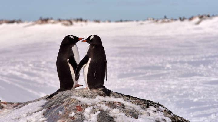 Thấy đôi chim cánh cụt đực có tình cảm trên mức bạn bè, nhân viên thủy cung liền đẩy thuyền nhiệt liệt - Ảnh 5.