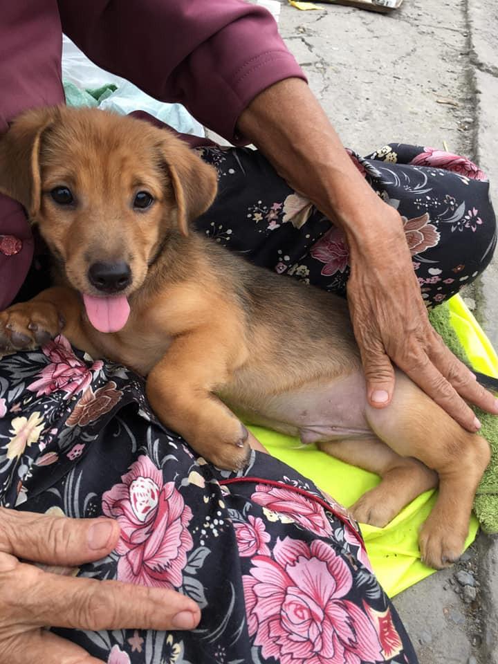 Cụ bà nhiều tuổi mắc bệnh nên phải bán chó con, cho người khác nuôi chó mẹ vì không nuôi nổi - Ảnh 2.
