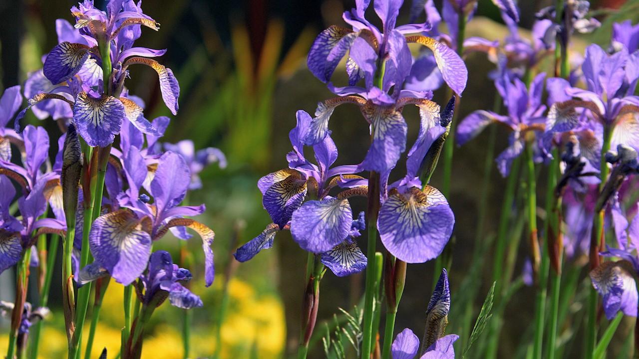 Bạn đang được ngắm nhìn loài hoa có mùi hương hiếm và đắt tiền nhất thế giới đấy - Ảnh 1.