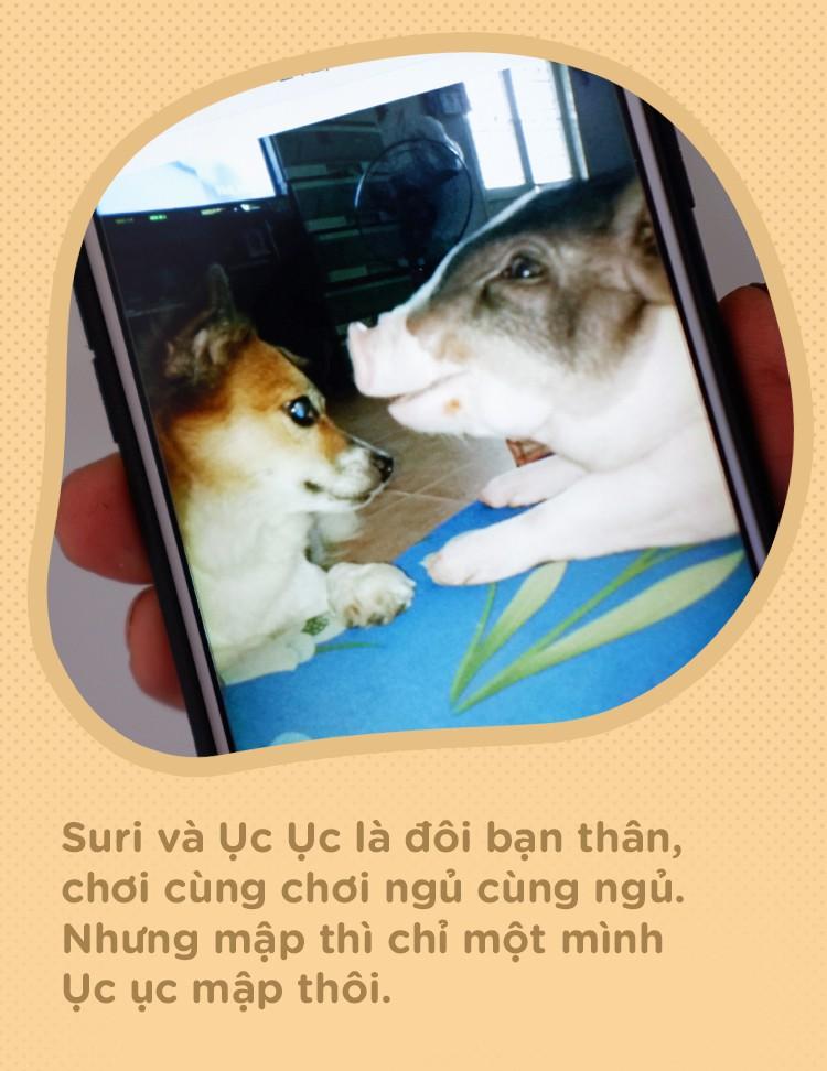 Người mẹ đơn thân ở Sài Gòn nuôi heo 100kg như thú cưng trong nhà: