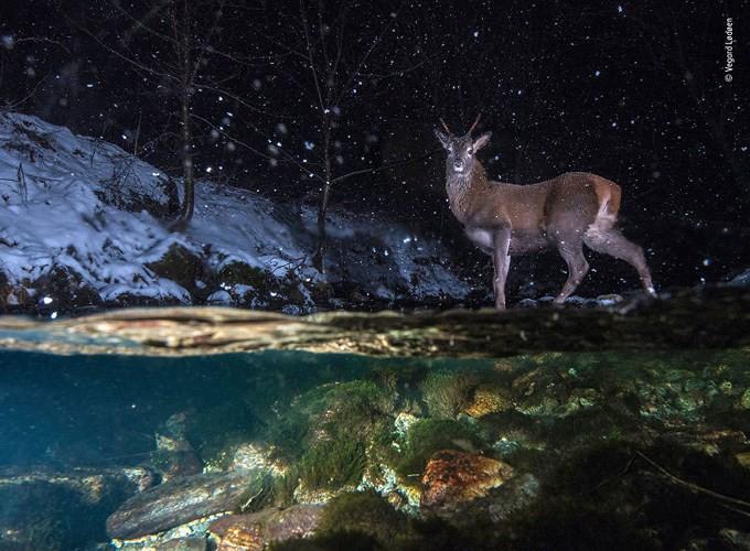 20 bức ảnh đẹp nhất Cuộc thi ảnh Thiên nhiên hoang dã 2018 - Ảnh 1.