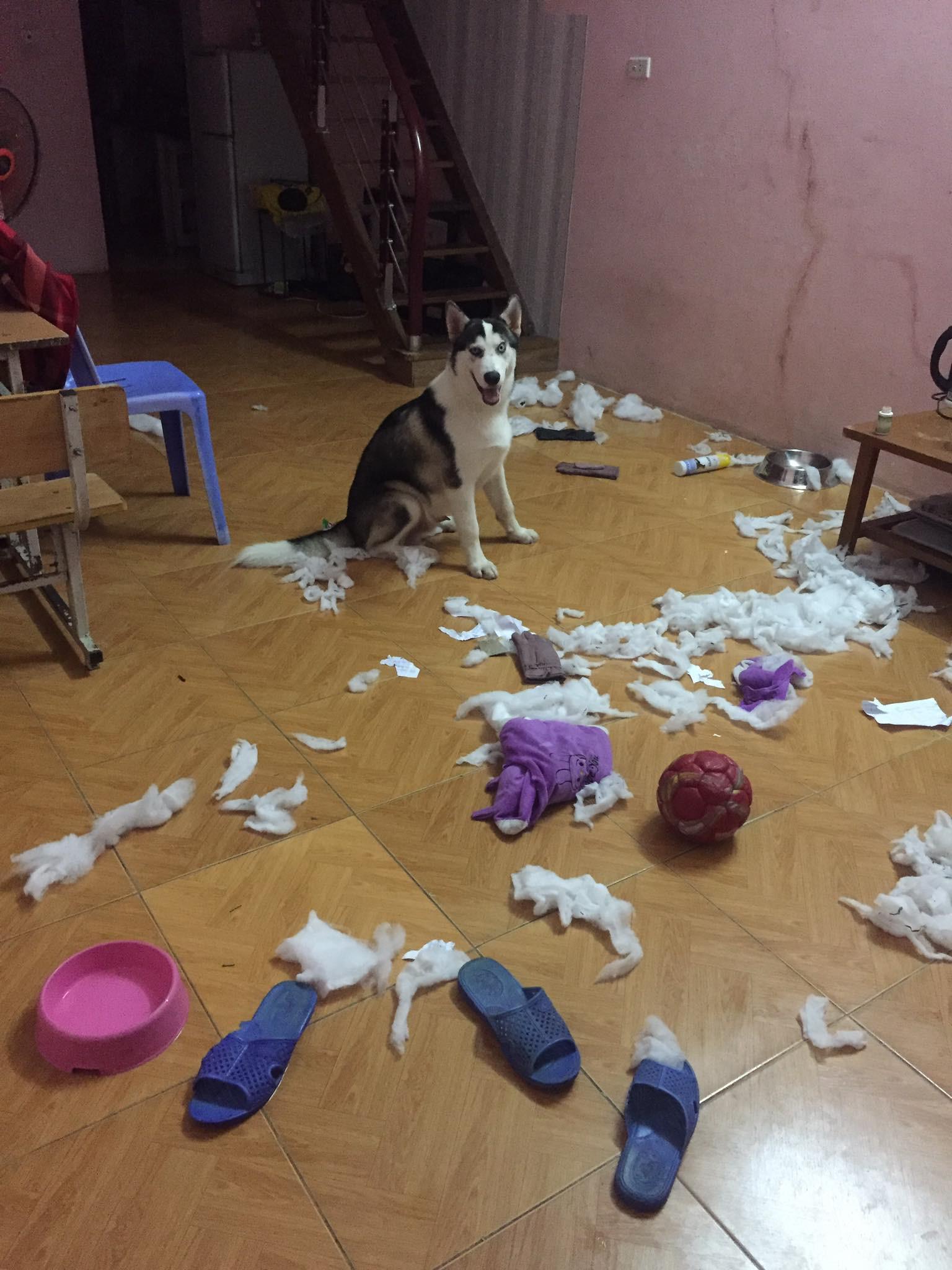 Cơn ác mộng mang tên nuôi boss ngáo: Hứng lên là phá tan tành nhà cửa không cần biết đúng sai - Ảnh 2.