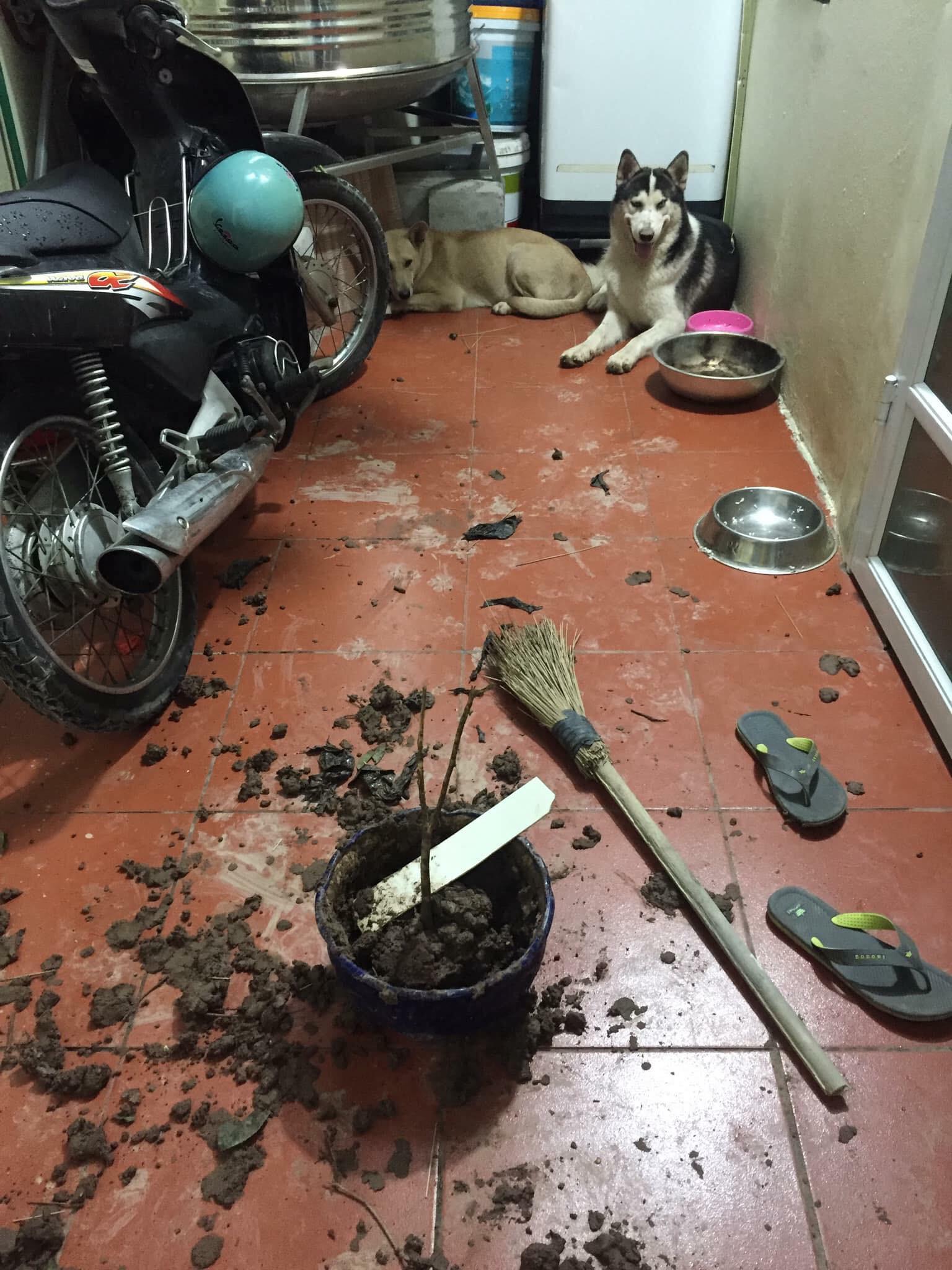 Cơn ác mộng mang tên nuôi boss ngáo: Hứng lên là phá tan tành nhà cửa không cần biết đúng sai - Ảnh 1.