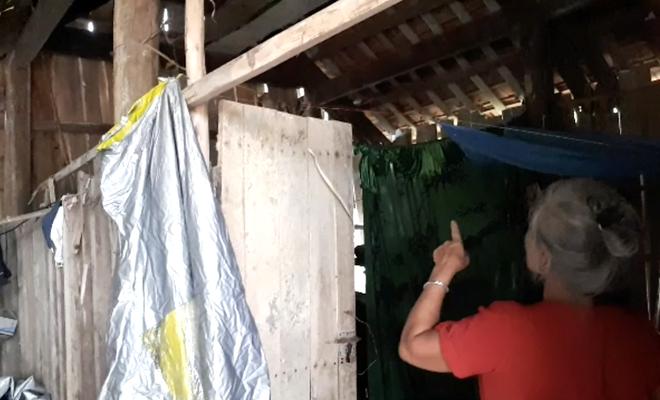 Một gia đình sống chung với hàng nghìn con ong vò vẽ kịch độc trong phòng ngủ - Ảnh 2.