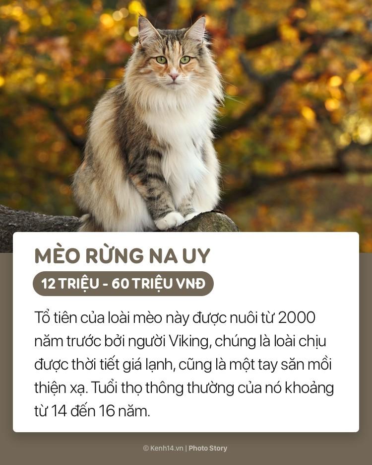 Những boss mèo đáng yêu và đắt tiền nhất nhì thế giới - Ảnh 1.