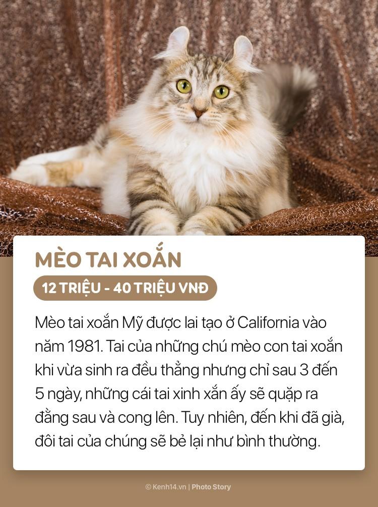 Những boss mèo đáng yêu và đắt tiền nhất nhì thế giới - Ảnh 3.
