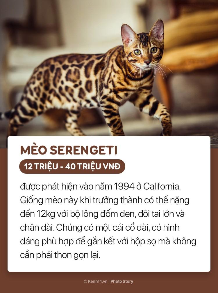 Những boss mèo đáng yêu và đắt tiền nhất nhì thế giới - Ảnh 5.