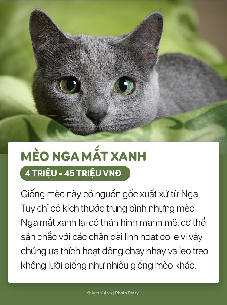 Những boss mèo đáng yêu và đắt tiền nhất nhì thế giới - Ảnh 7.