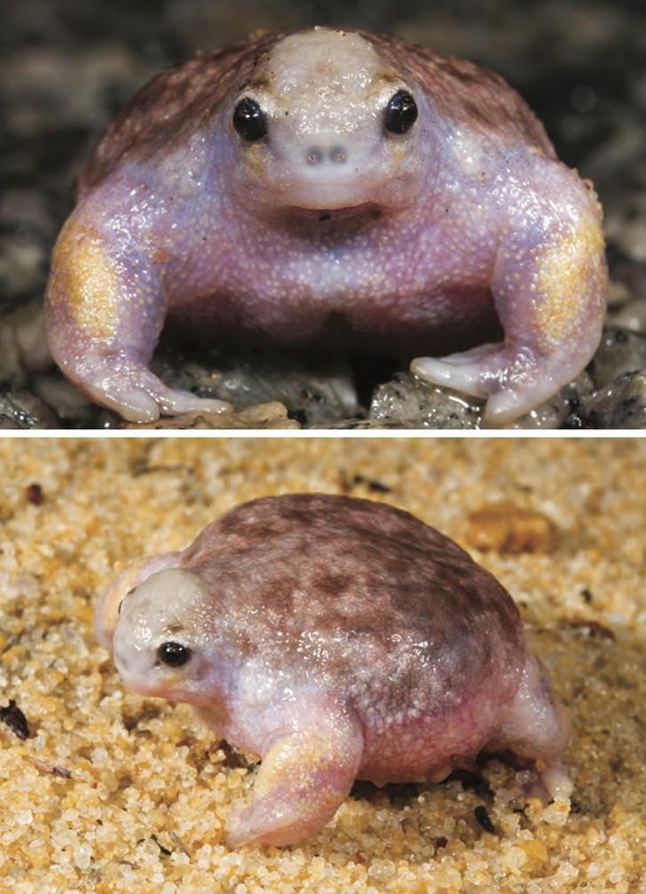 10 con vật có ngoại hình kỳ dị mà chẳng mấy khi bạn nhìn thấy trên internet - Ảnh 4.