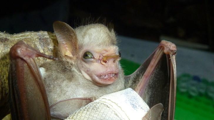 10 con vật có ngoại hình kỳ dị mà chẳng mấy khi bạn nhìn thấy trên internet - Ảnh 6.