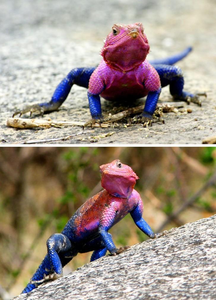 10 con vật có ngoại hình kỳ dị mà chẳng mấy khi bạn nhìn thấy trên internet - Ảnh 12.