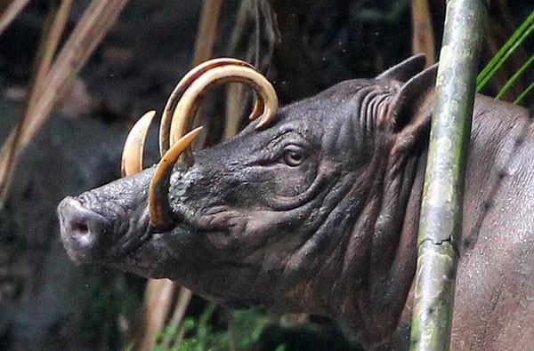10 con vật có ngoại hình kỳ dị mà chẳng mấy khi bạn nhìn thấy trên internet - Ảnh 9.
