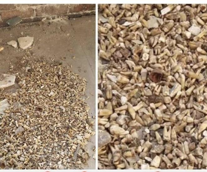 Góc kinh dị: Một đội thợ hồ ở Mỹ vừa tìm thấy khoảng 1000 chiếc răng người giấu trong tường - Ảnh 1.