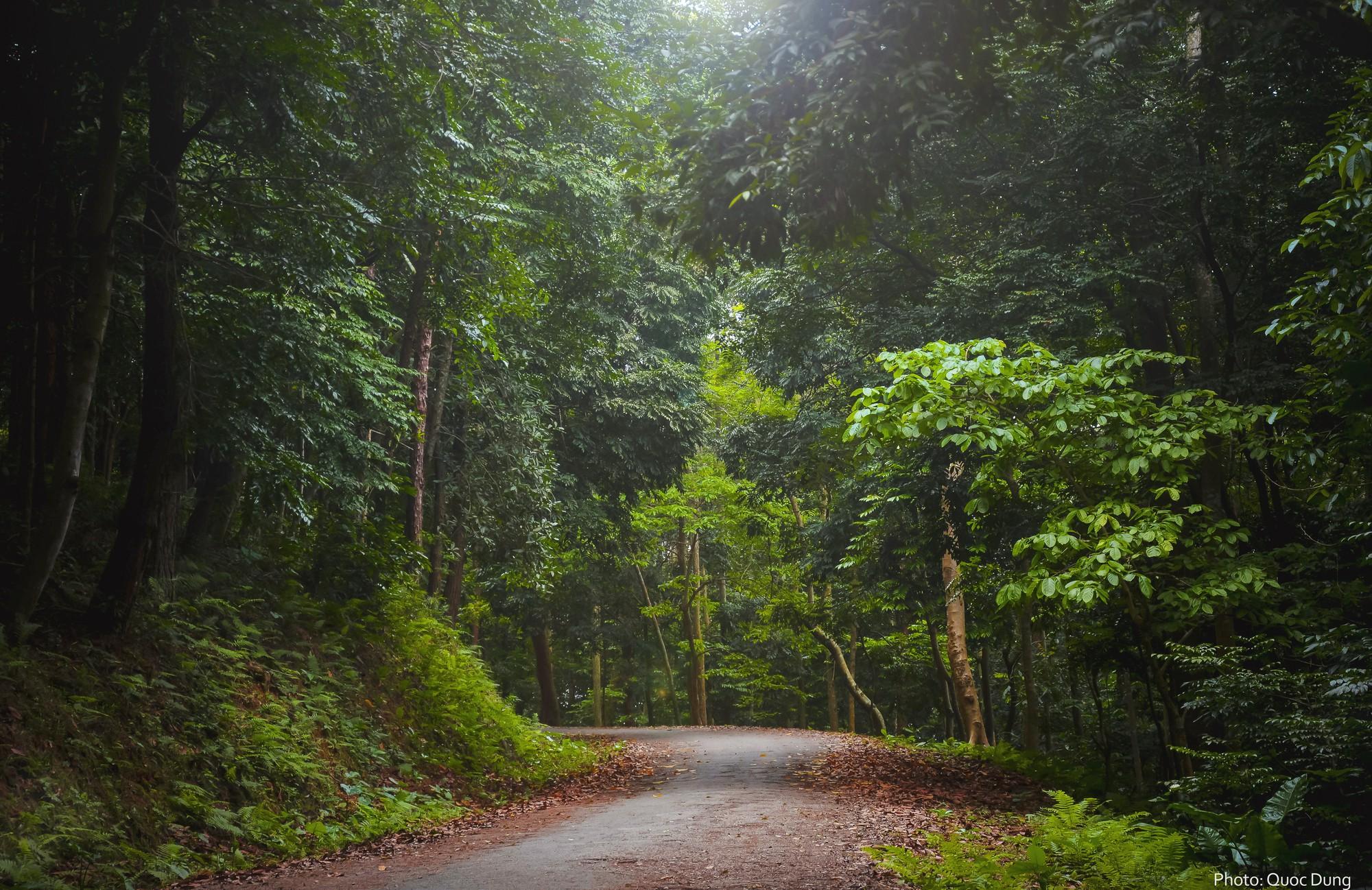 Đây là Đại học duy nhất ở Việt Nam có 1 khu rừng tuyệt đẹp ngay trong khuôn viên trường, tha hồ sống ảo - Ảnh 2.