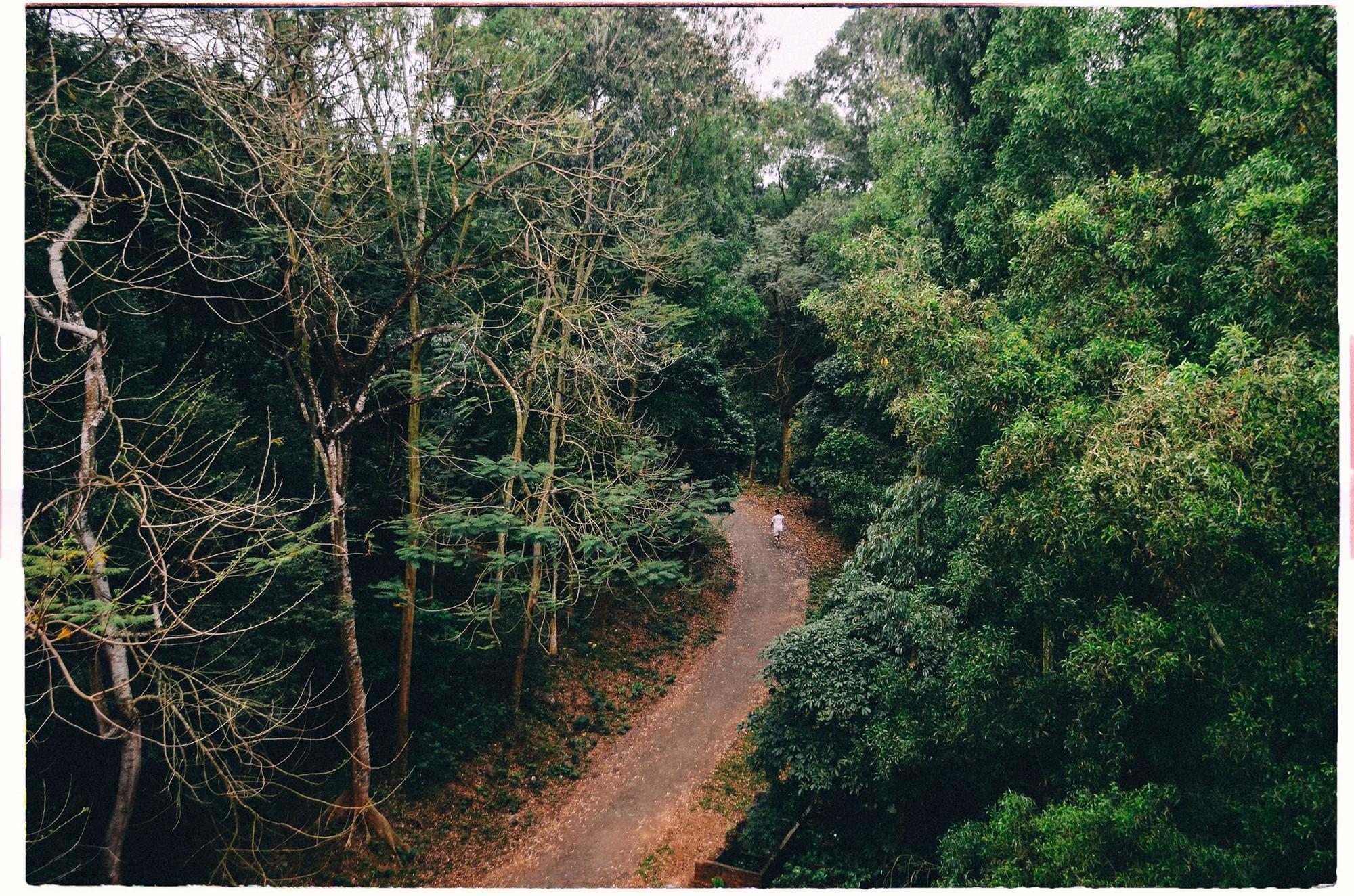 Đây là Đại học duy nhất ở Việt Nam có 1 khu rừng tuyệt đẹp ngay trong khuôn viên trường, tha hồ sống ảo - Ảnh 1.