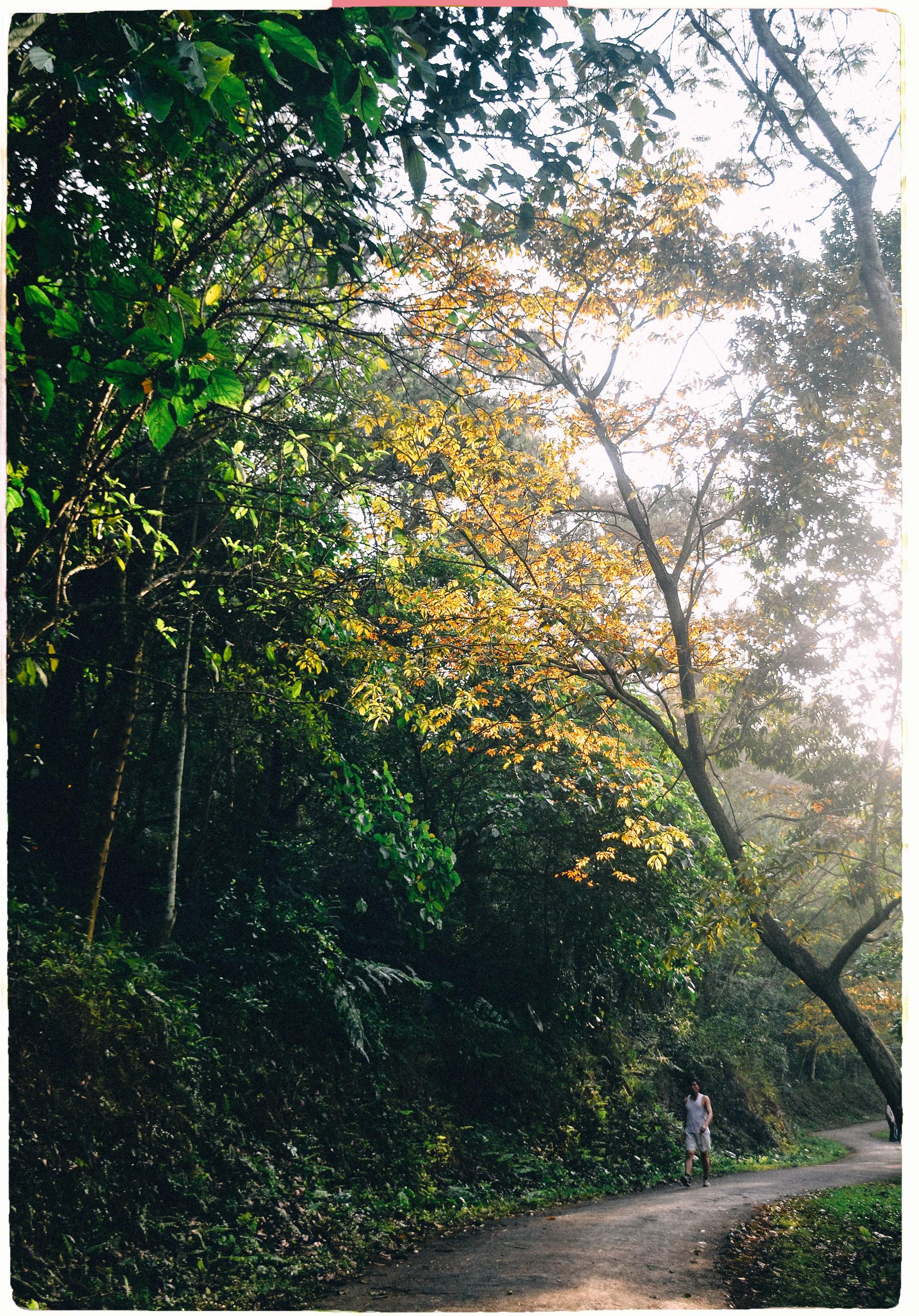 Đây là Đại học duy nhất ở Việt Nam có 1 khu rừng tuyệt đẹp ngay trong khuôn viên trường, tha hồ sống ảo - Ảnh 3.