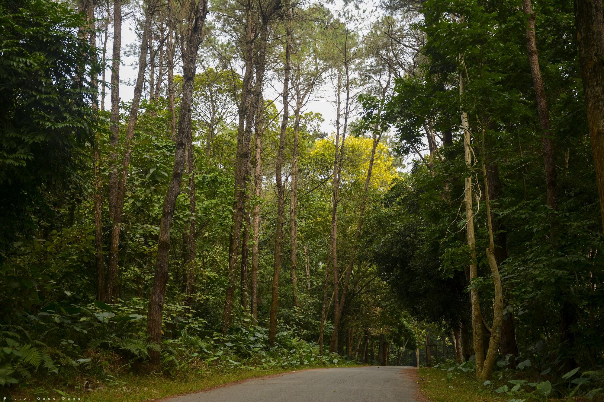Đây là Đại học duy nhất ở Việt Nam có 1 khu rừng tuyệt đẹp ngay trong khuôn viên trường, tha hồ sống ảo - Ảnh 4.