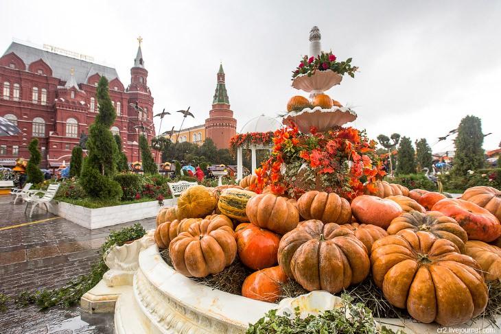 Nước Nga đã vào thu với sắc vàng đẹp say đắm lòng người, xách vali lên và đi du học thôi! - Ảnh 5.