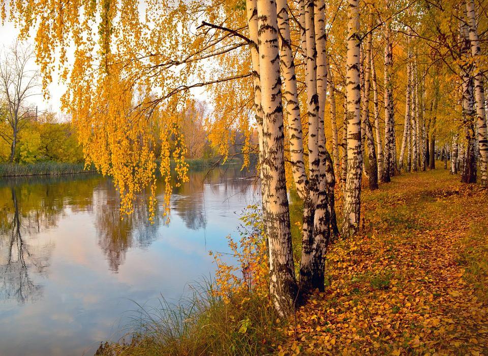 Nước Nga đã vào thu với sắc vàng đẹp say đắm lòng người, xách vali lên và đi du học thôi! - Ảnh 15.