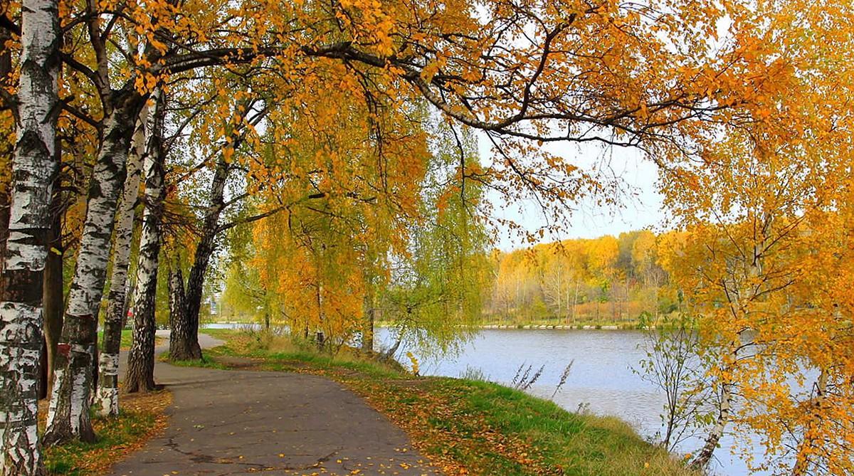 Nước Nga đã vào thu với sắc vàng đẹp say đắm lòng người, xách vali lên và đi du học thôi! - Ảnh 18.