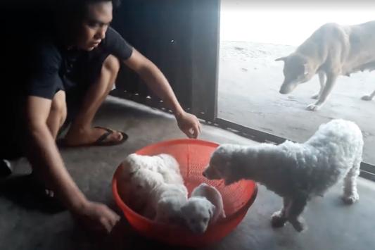 Vụ người đàn ông đi xế hộp bế trộm chó: Nguyên nhân là yêu động vật và say rượu, đã nhờ người đem trả lại cho khổ chủ - Ảnh 2.