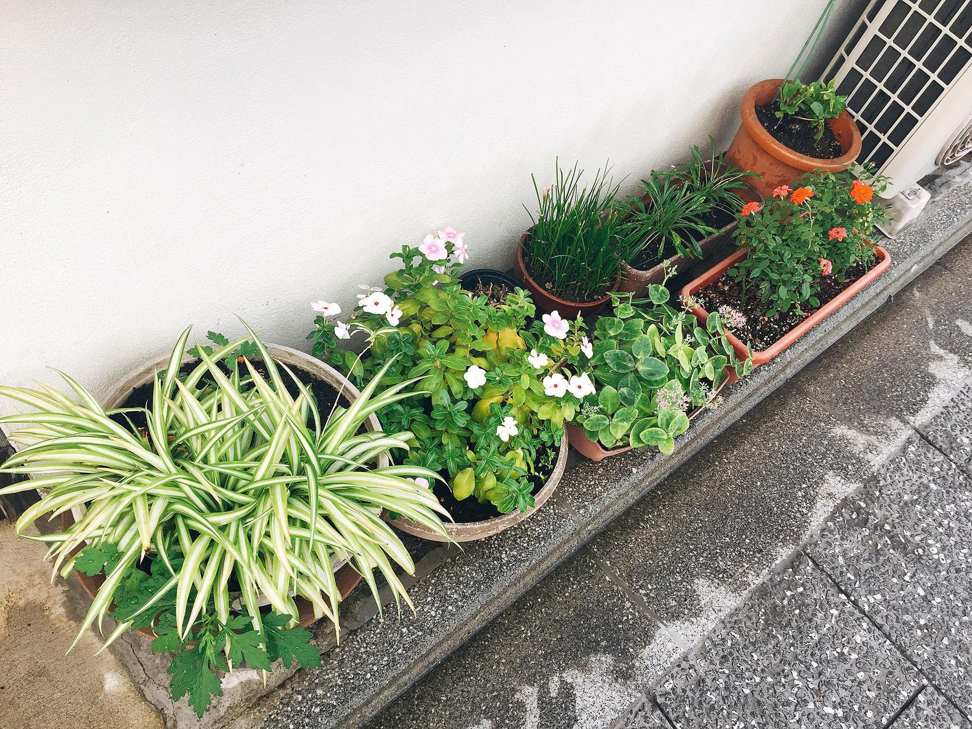 Chia sẻ của du học sinh Việt tại Nhật: Rau xanh là thứ đắt nhất và thứ gây nhớ nhung nhất là cơm nhà - Ảnh 15.