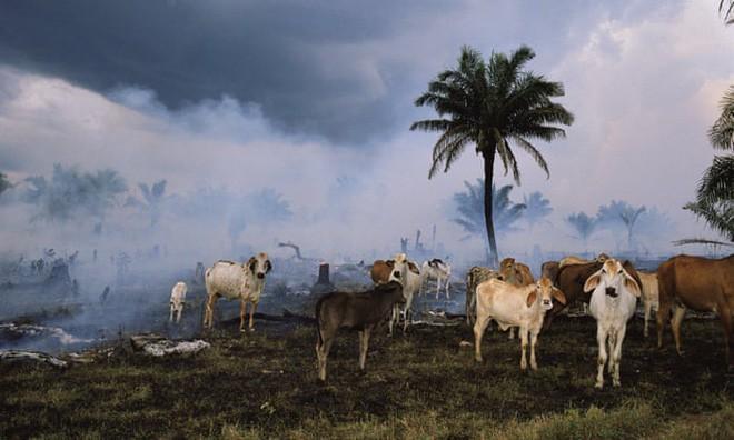 Báo cáo cho thấy, nhân loại đã khiến Trái đất mất 60% số lượng động vật trong hơn 40 năm qua - Ảnh 1.