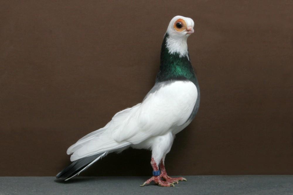 10 con vật có ngoại hình kỳ dị mà chẳng mấy khi bạn nhìn thấy trên internet - Ảnh 1.