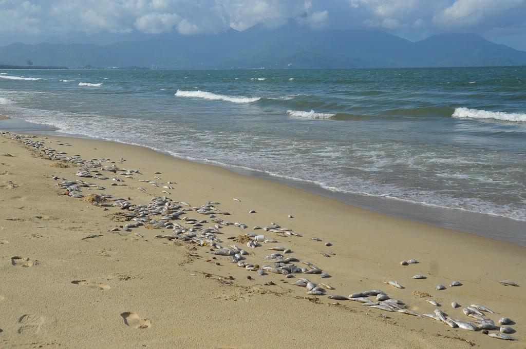 Cá chết hàng loạt tại biển Đà Nẵng, người dân không dám xuống tắm - Ảnh 1.