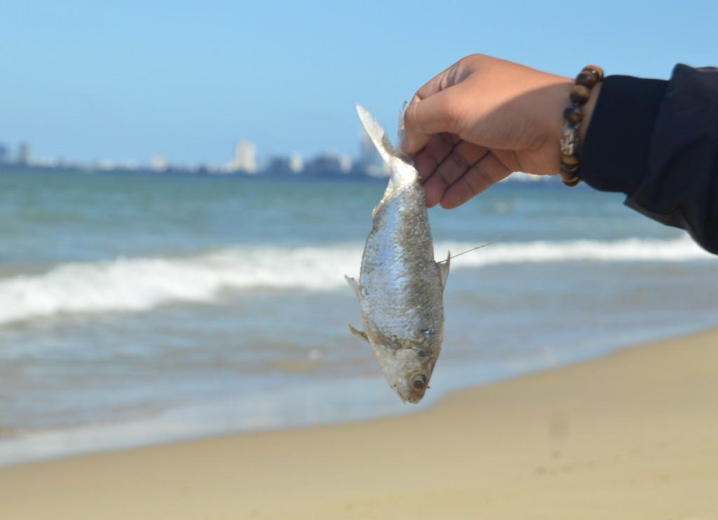 Cá chết hàng loạt tại biển Đà Nẵng, người dân không dám xuống tắm - Ảnh 3.