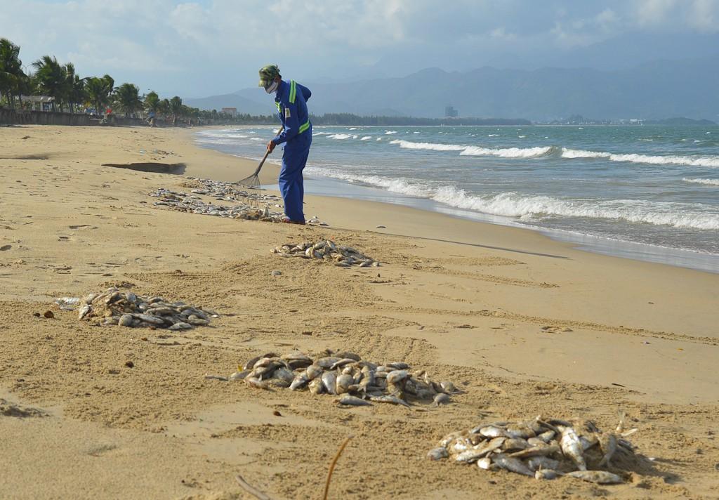 Cá chết hàng loạt tại biển Đà Nẵng, người dân không dám xuống tắm - Ảnh 4.