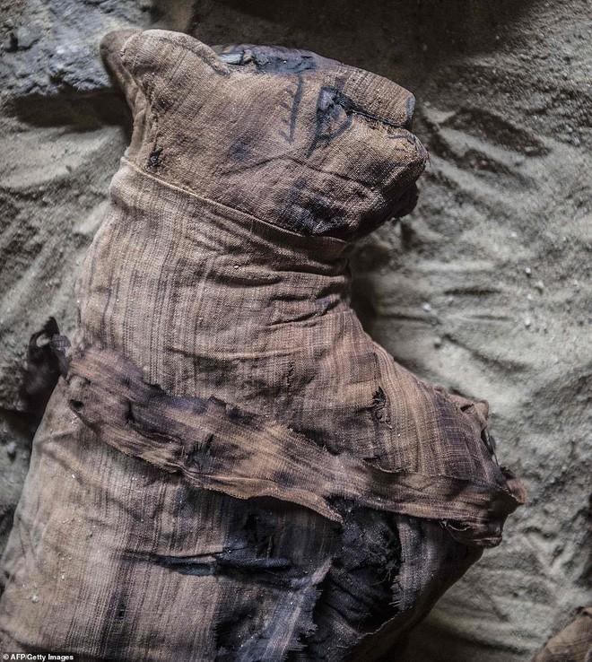 Xác ướp bọ hung và mèo được tìm thấy bên trong ngôi mộ Ai Cập cổ.2
