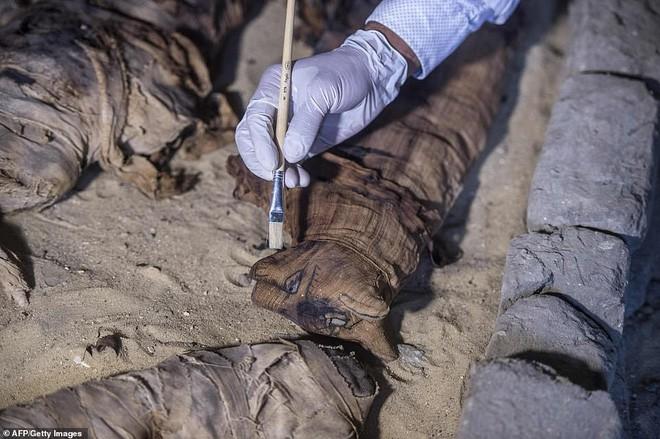 Xác ướp bọ hung và mèo được tìm thấy bên trong ngôi mộ Ai Cập cổ.4